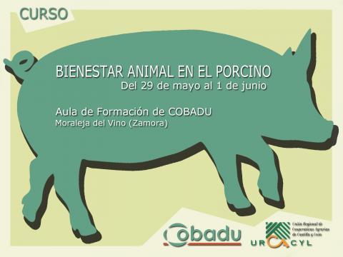 Curso de Bienestar Animal en explotaciones de porcino