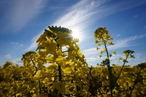 Oleoprecisión 4.0: Encuesta sobre el cultivo de oleaginosas en España