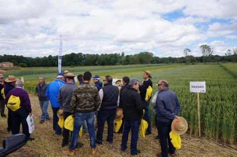 Socios de la cooperativa en la visita a los campos de ensayo de cereal