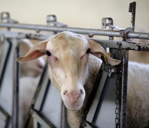 Subvenciones para los seguros de retirada de cadáveres de animales