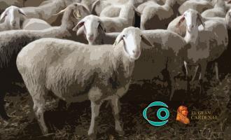 Proyecto alimentación queso ovino