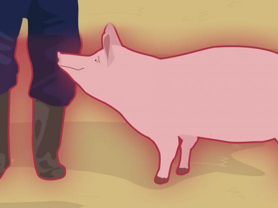 Consejos para evitar la peste porcina africana