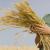 Asesoramiento agrícola