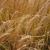 Recogida de producciones agrícolas: cereales, leguminosas, proteaginosas