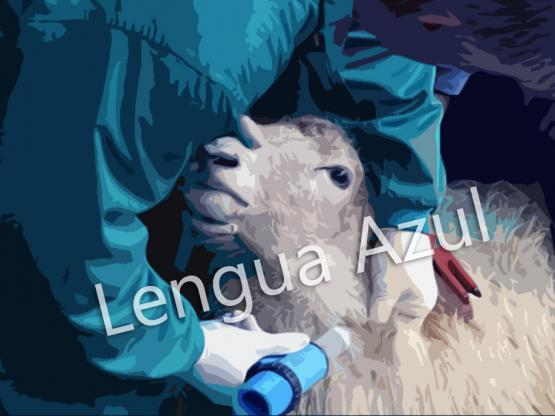 Lengua Azul.